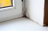 Is Mould Hiding In Your Home?
